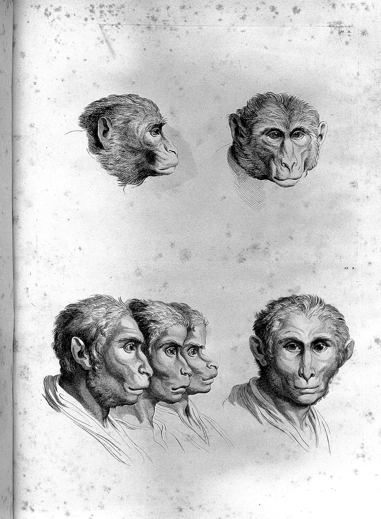 a description of how man evolved the human evolution Advertisements: man is a product of evolution therefore human evolution is intimately related to the origin of life and its development on the face of earth it is customary to speak of.