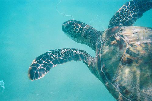 Hanauma Bay turtle snorkel Hawaii best sea adventures