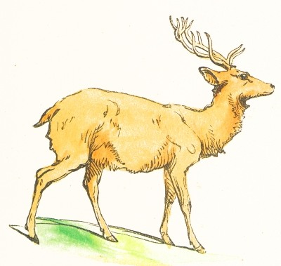 file clip art deer drawing jpg wikimedia commons