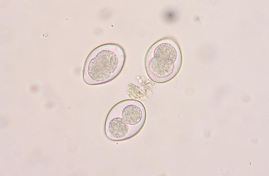 Coccidia: What Is It Anyway