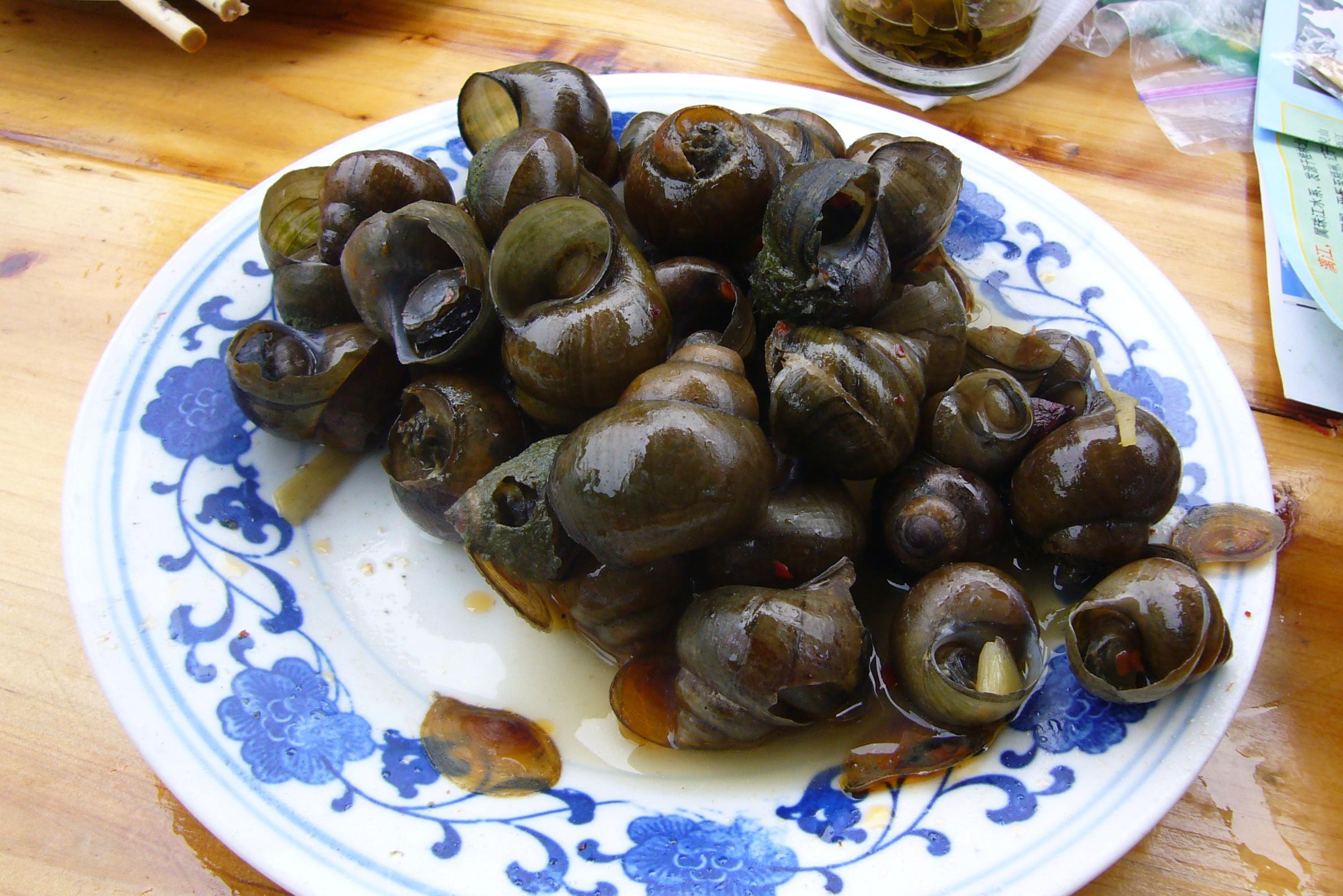 Sea Snails A Natural History