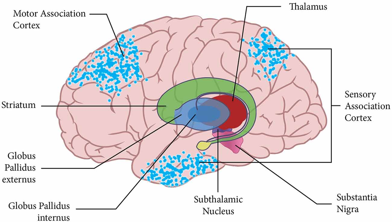 Heist die Motor strip in the brain system