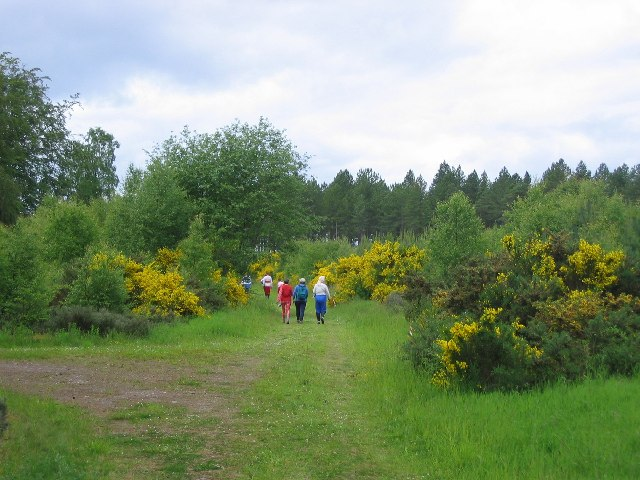 Culbin Forest - geograph.org.uk - 6641