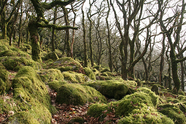 Dartmoor Forest, Wistman's Wood - geograph.org.uk - 689790