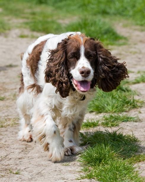 Dog Walking Arnold Nottingham