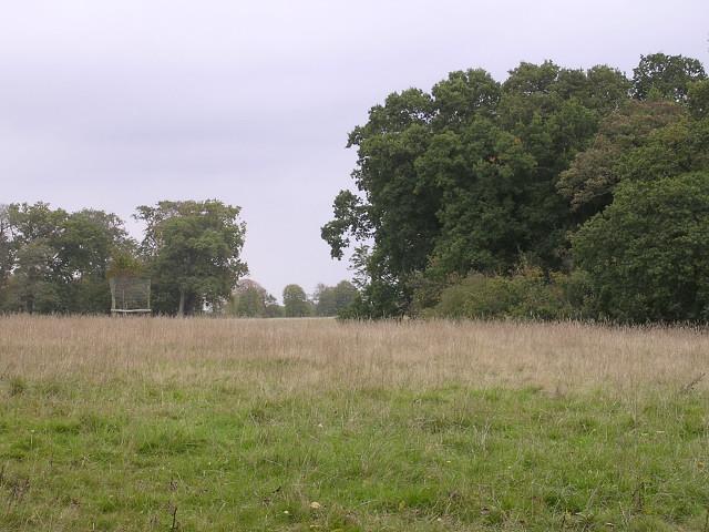 Edge of Roydon Woods and Brockenhurst Park, New Forest - geograph.org.uk - 62516