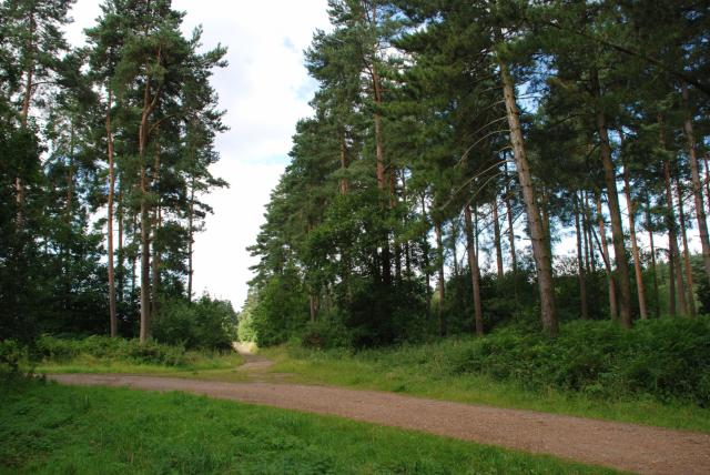 Forest Path - geograph.org.uk - 510470