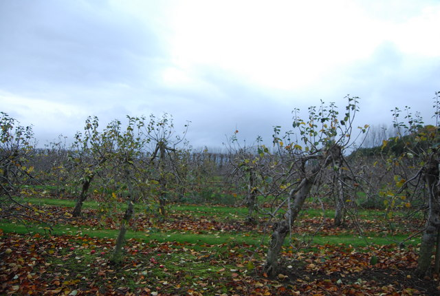 File:Fruit orchards - geograph.org.uk - 1614292.jpg