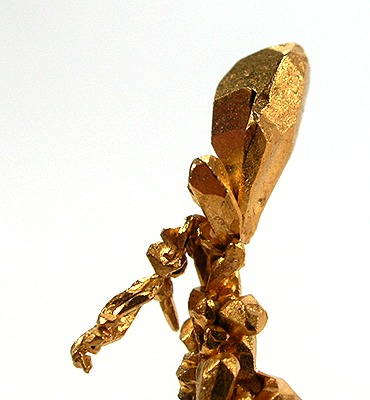 Native gold. Rare specimen of stout crystals growing off of a central stalk, size 3.7 x 1.1 x 0.4 cm, from Venezuela. Gold-mz4b.jpg