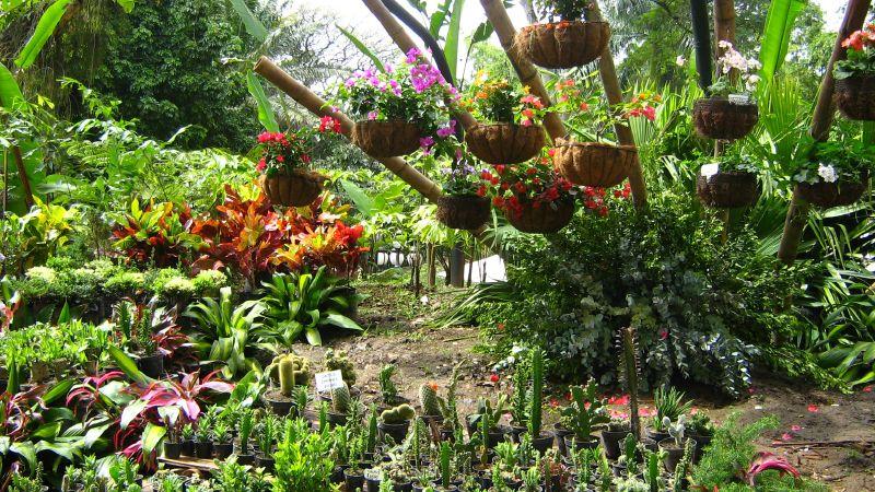 File jardin botanico plantas caseras for Antorchas para jardin caseras