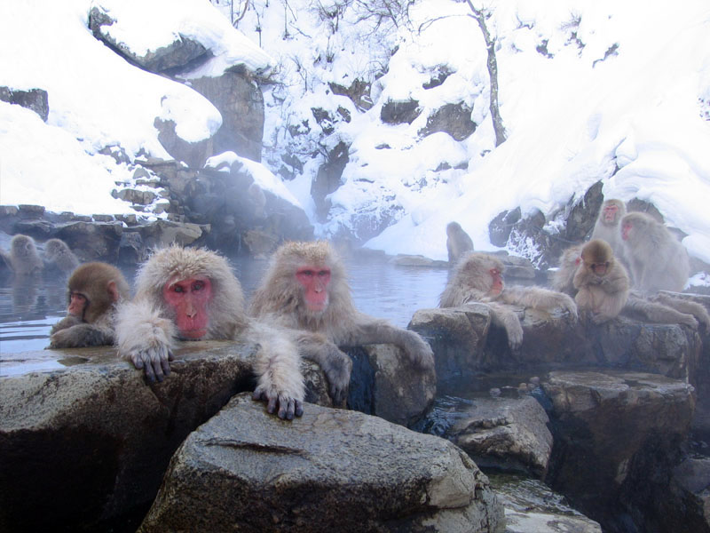 Jigokudani hotspring in Nagano Japan 001