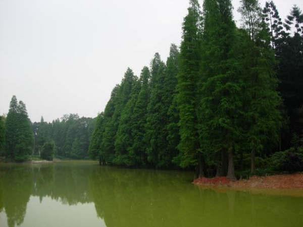 Jard n bot nico del sur de china wikipedia la for Jardin de china