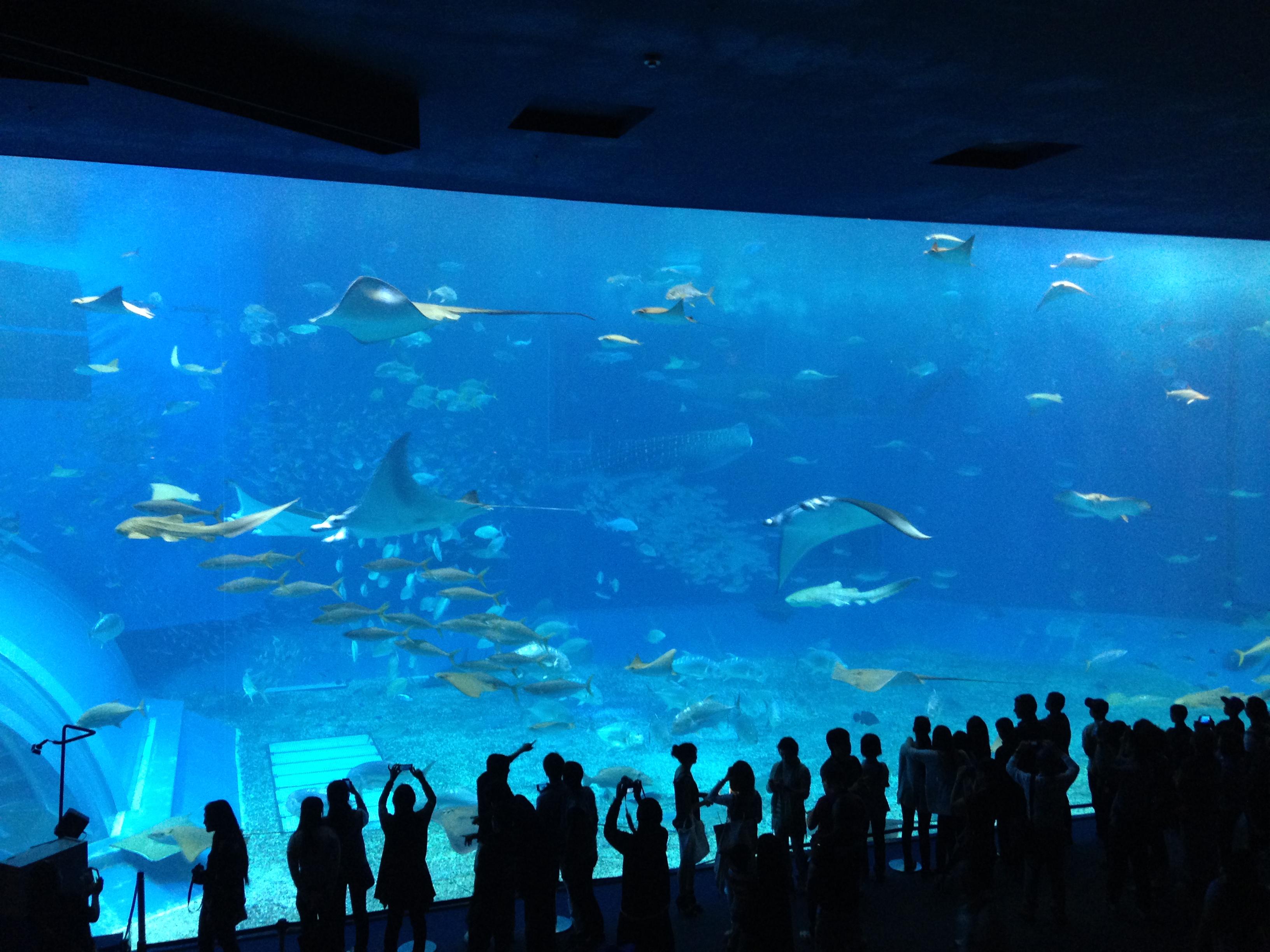 Okinawa Churaumi Aquarium 2