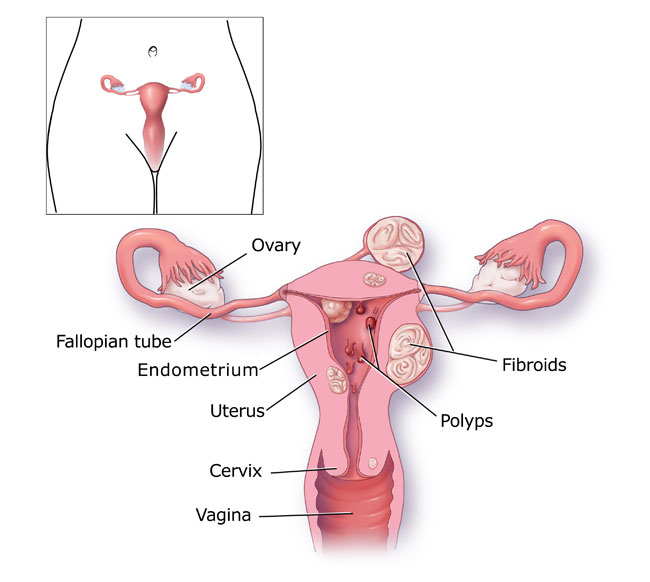 Image result for Menstrual period