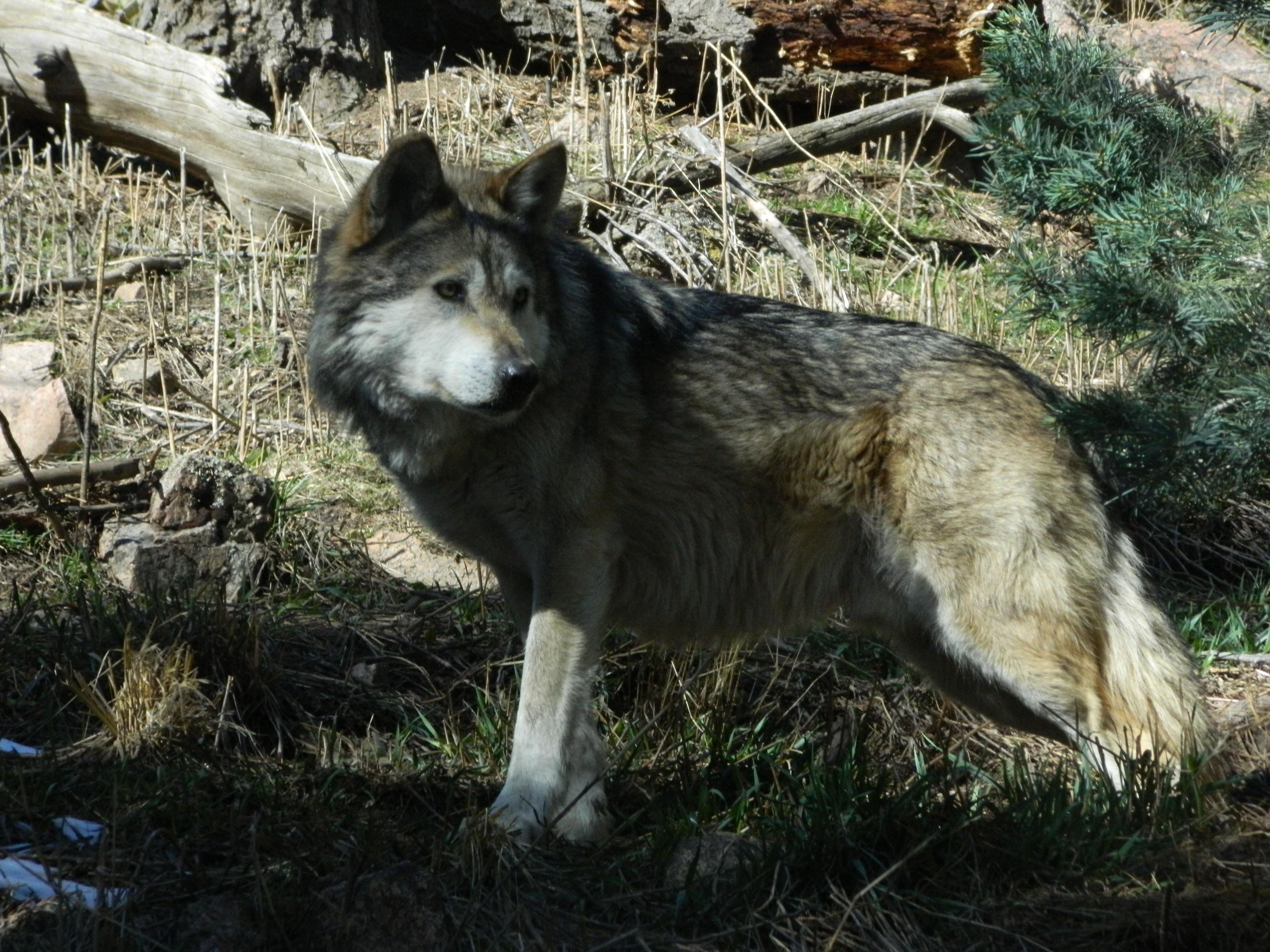 Cheyenne mountain zoo
