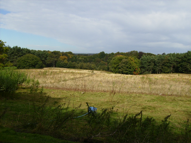 Open land in Lambton Park - geograph.org.uk - 569331