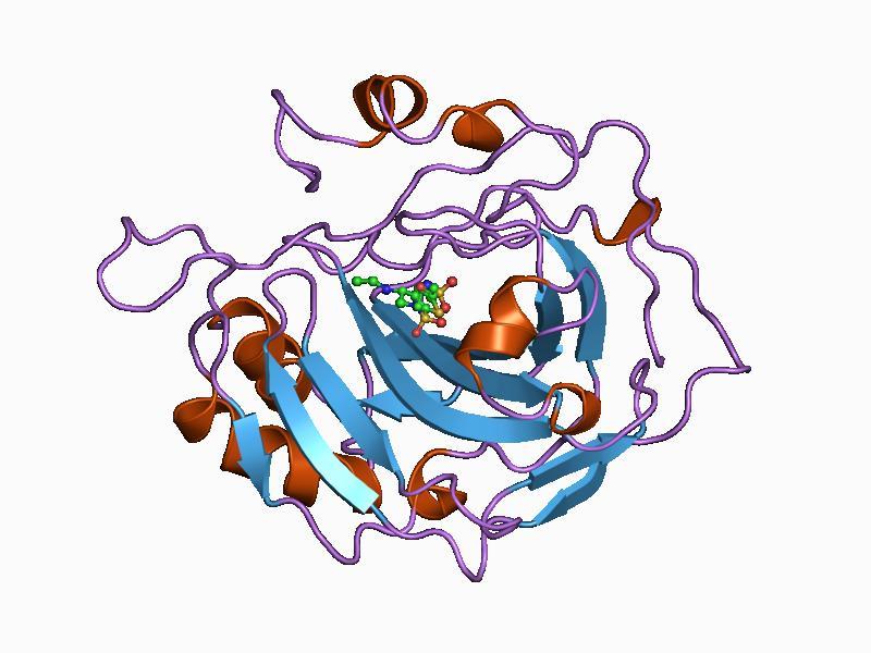 enzima njeriu