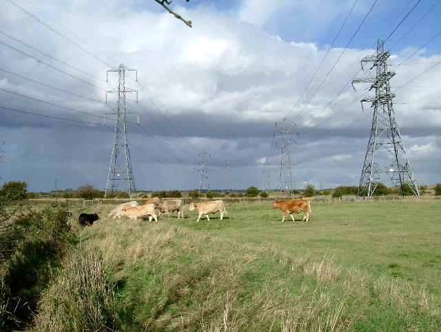 Pasture and Pylons - geograph.org.uk - 60038