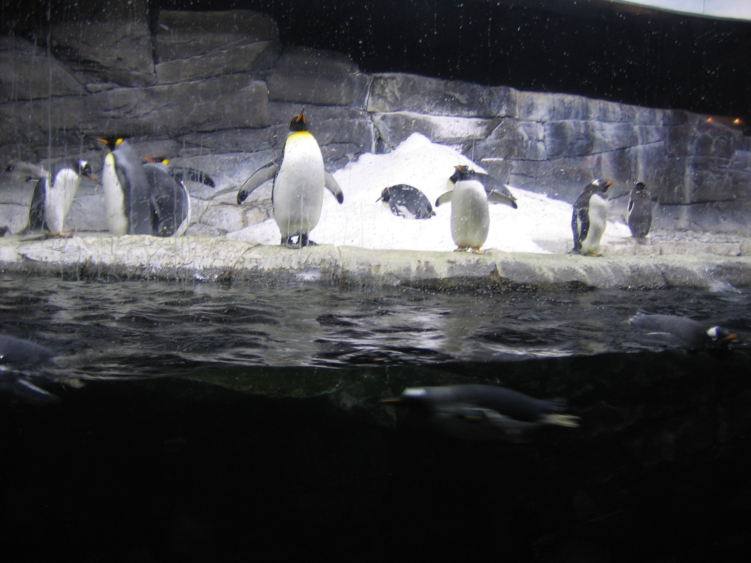 Image Result For Newport Aquarium