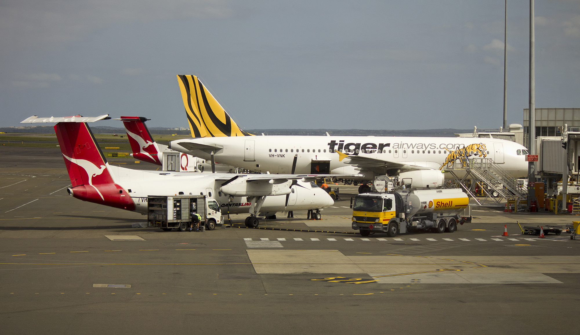 R Tiger Airways Tiger Airways | Dinta ...