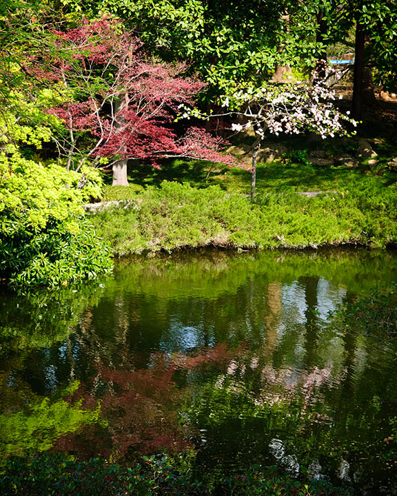File:Reflections Of The Spring Vegetation In The Japanese