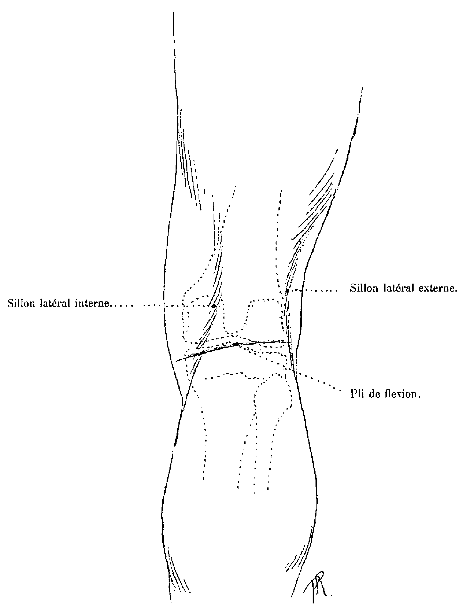 File:Richer - Anatomie artistique, 1 p. 236.png - Wikimedia Commons