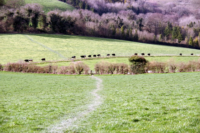 South Downs Way, below Beacon Hill - geograph.org.uk - 831085