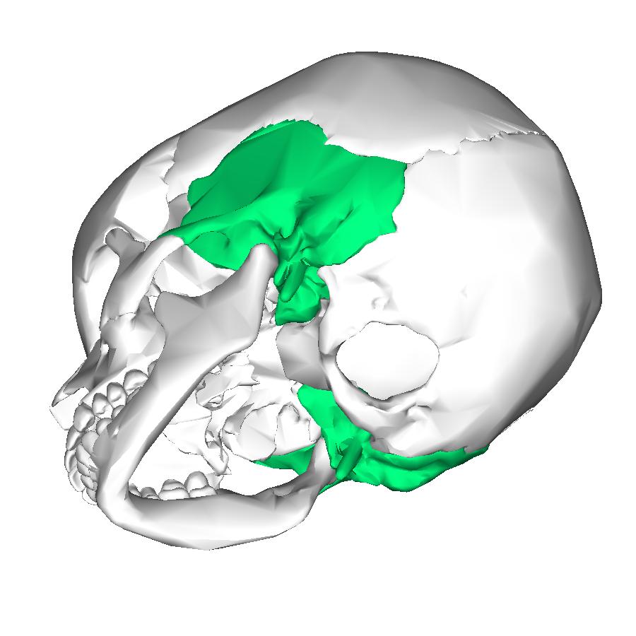 Temporal Bone – craftbrewswag.info