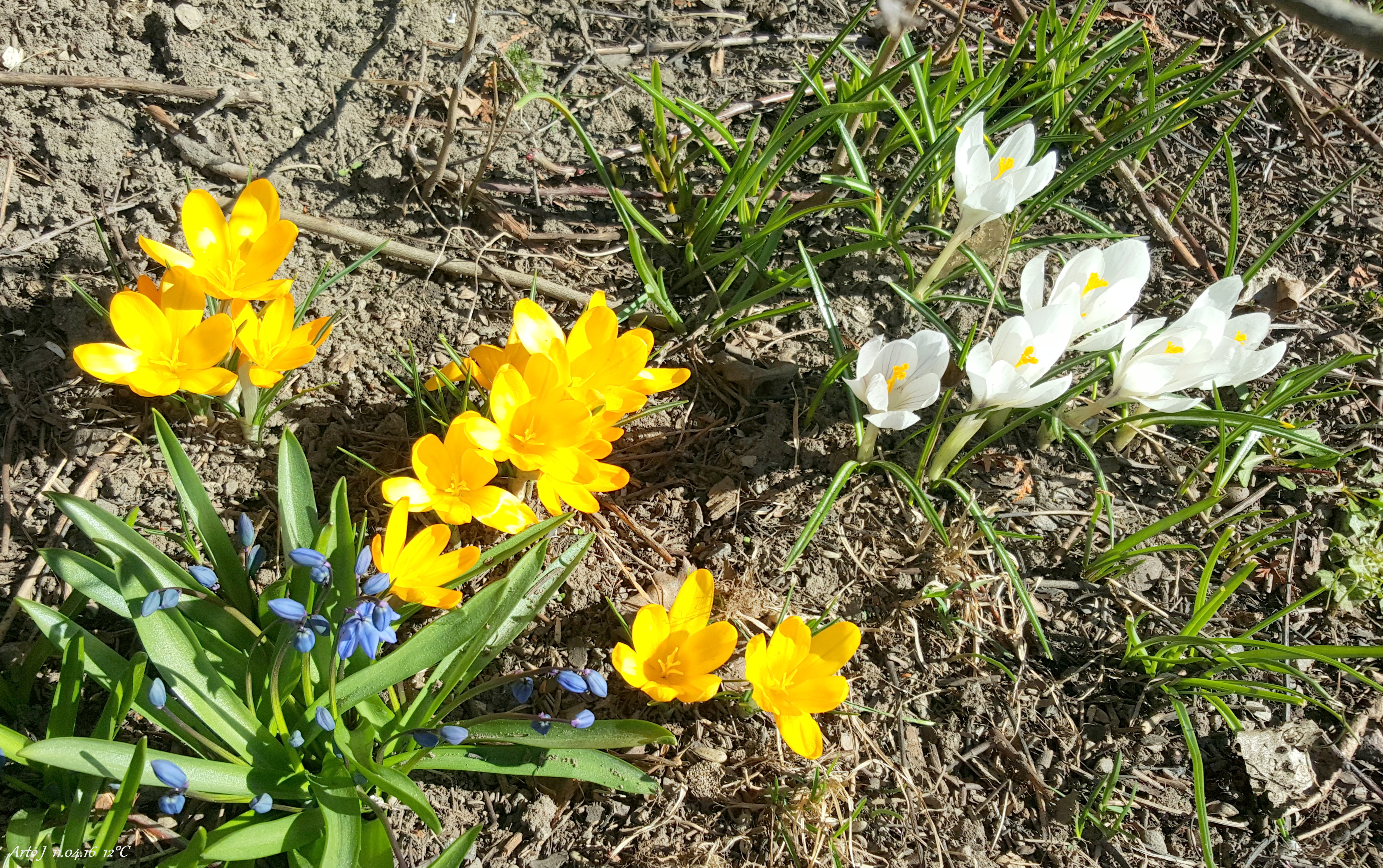 Filethe First Spring Flowers Panoramiog Wikimedia Commons