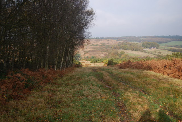 The Vanguard Way, Ashdown Forest - geograph.org.uk - 1583585