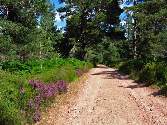 Track in Glen Tanar - geograph.org.uk - 975414