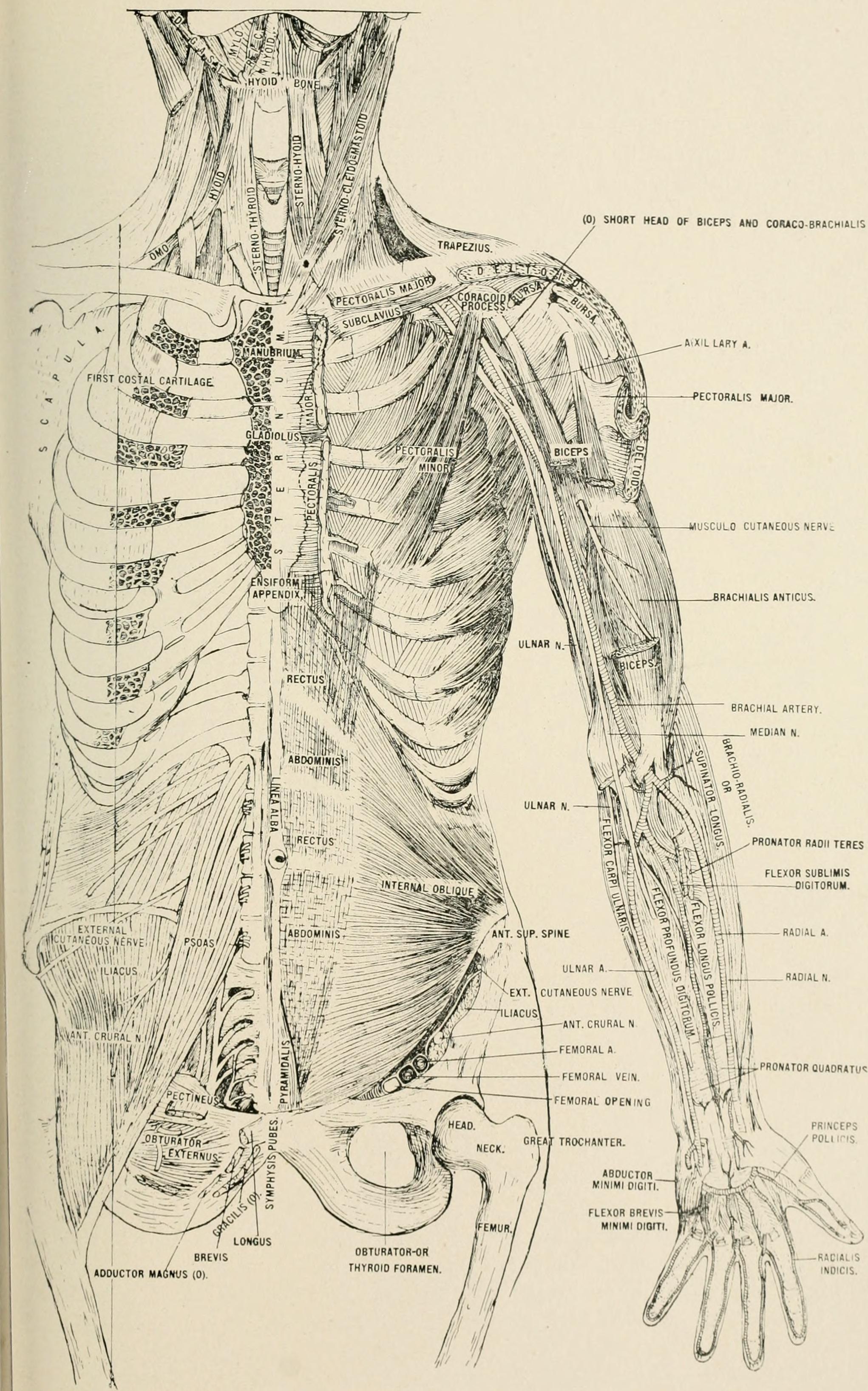 Beste Human Anatomy History Bilder - Menschliche Anatomie Bilder ...