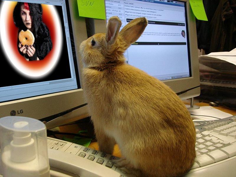 File:Animal testing 5.jpg