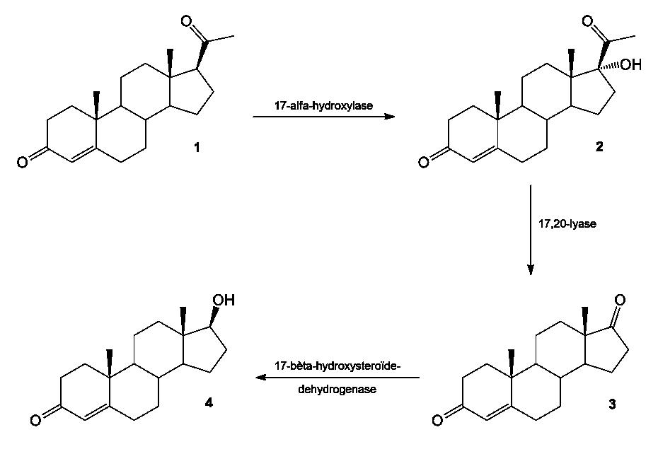 Steroid Anabolik Wikipedia Bahasa Indonesia Ensiklopedia Bebas