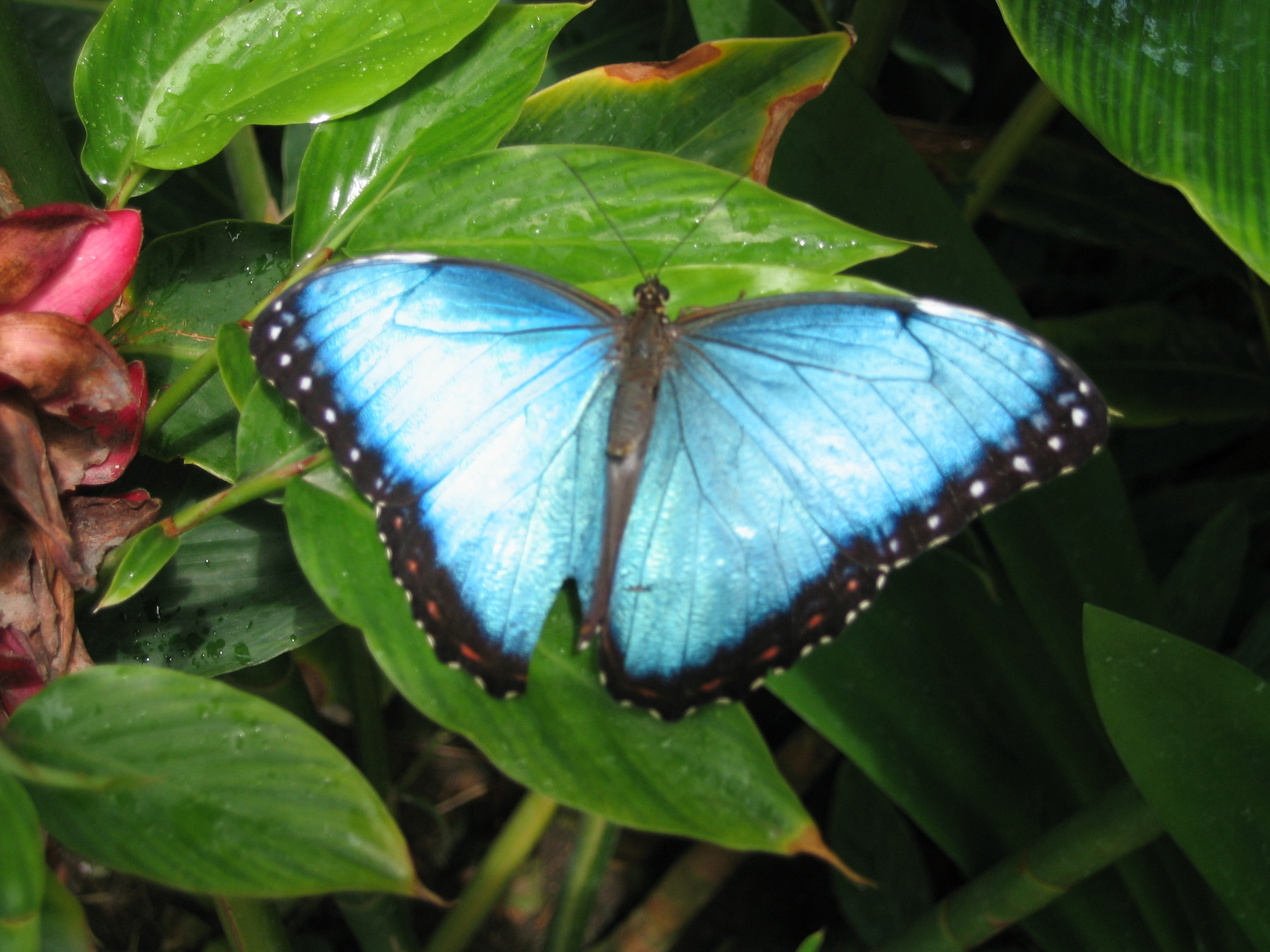 list of butterflies/names of/study of/history of/epidoptera/flowers/eggs