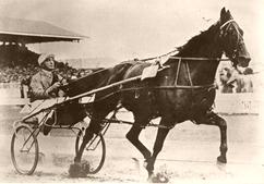 Captain Sandy New Zealand Standardbred racehorse