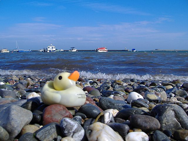 File:Duck number 26845, Derbyhaven, Isle of Man - geograph ...