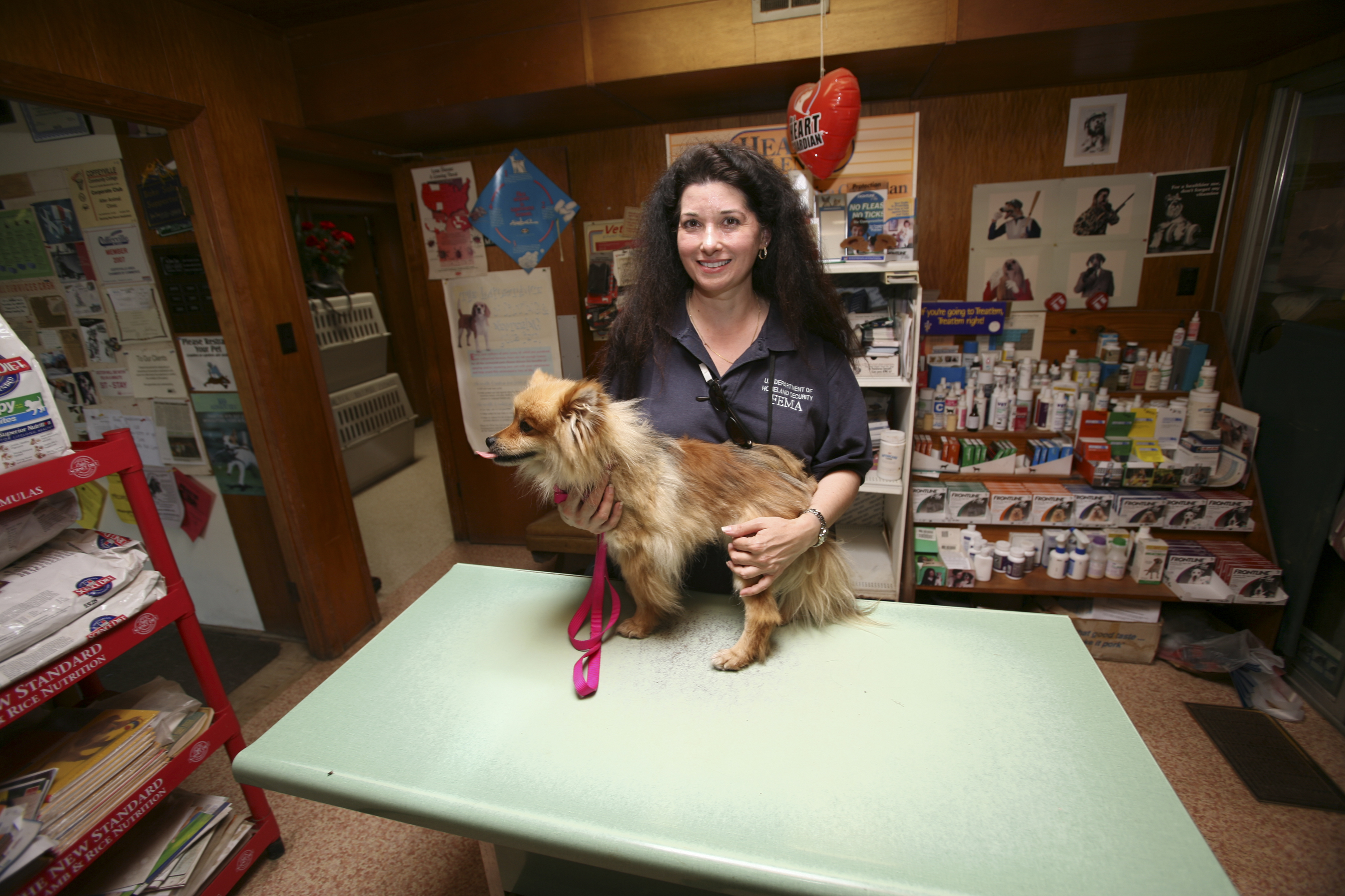Dog in Vet Treatment Room