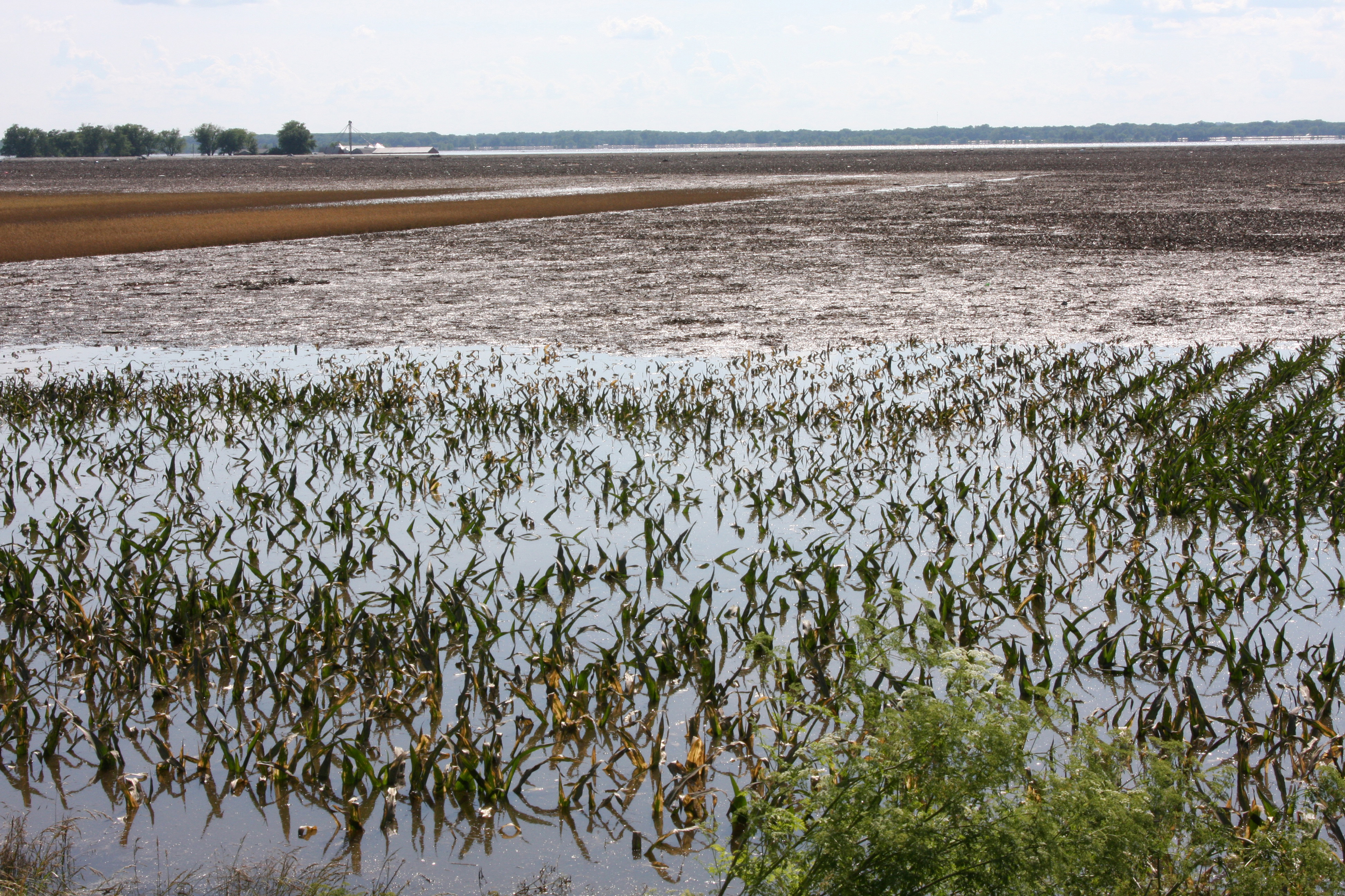 Robert Kaufmann [Public domain] https://upload.wikimedia.org/wikipedia/commons/8/8d/FEMA_-_36365_-_Flooded_corn_field_in_Illinois.jpg