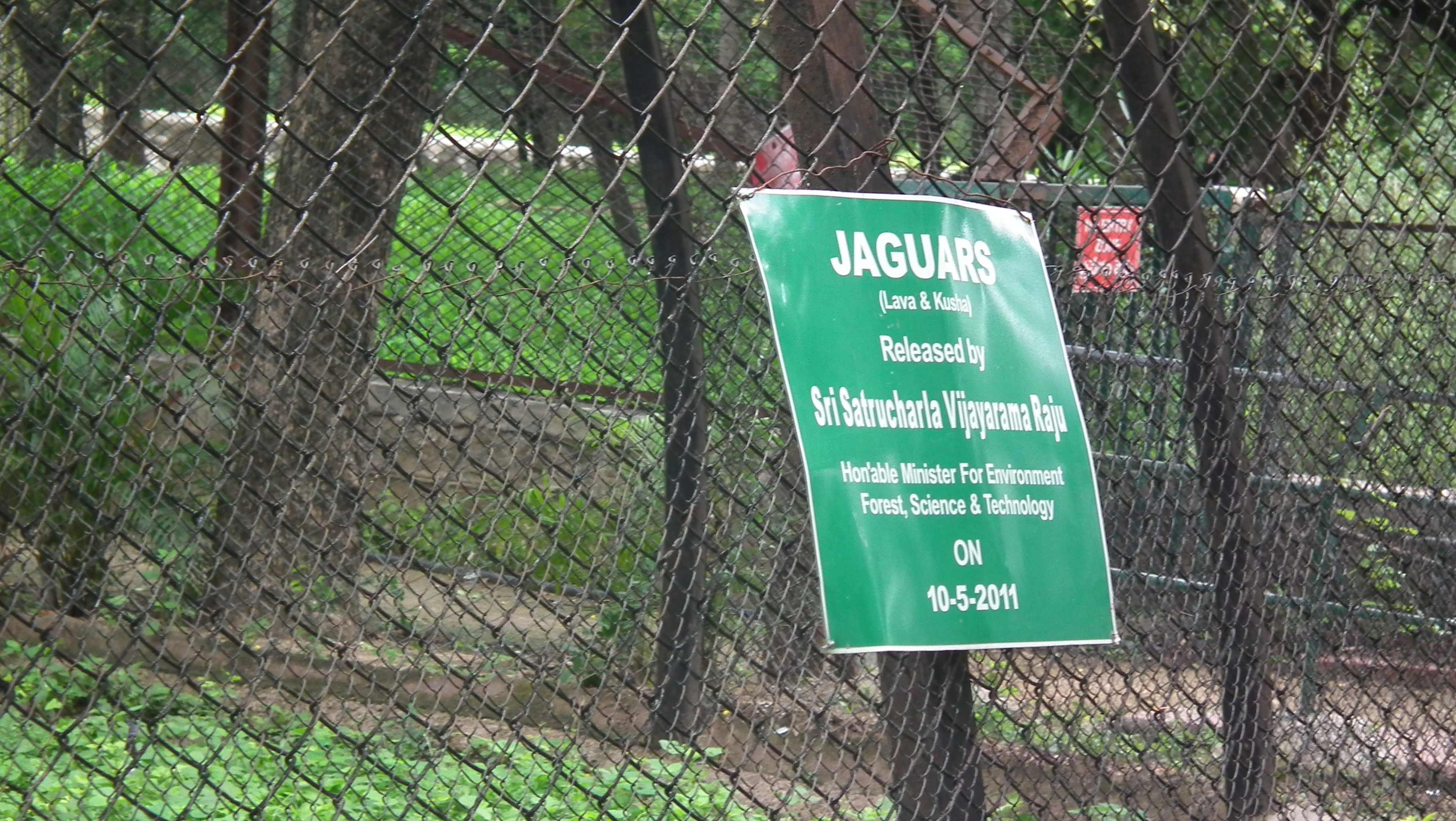 File:Jaguar from Nehru Zoological park Hyderabad 4239.JPG