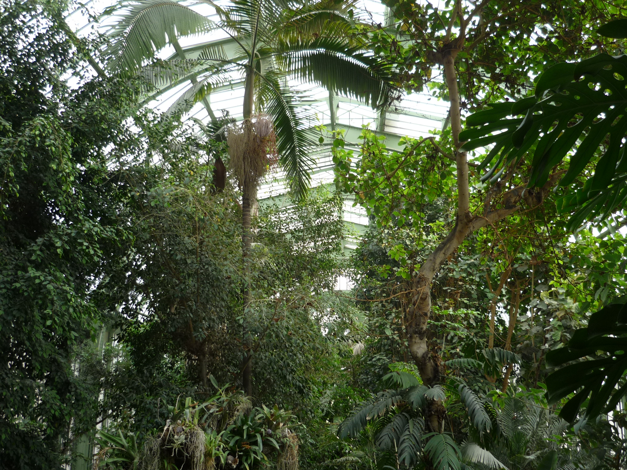 File jardin des plantes paris serre tropicale4 jpg wikimedia commons for Plante de jardin