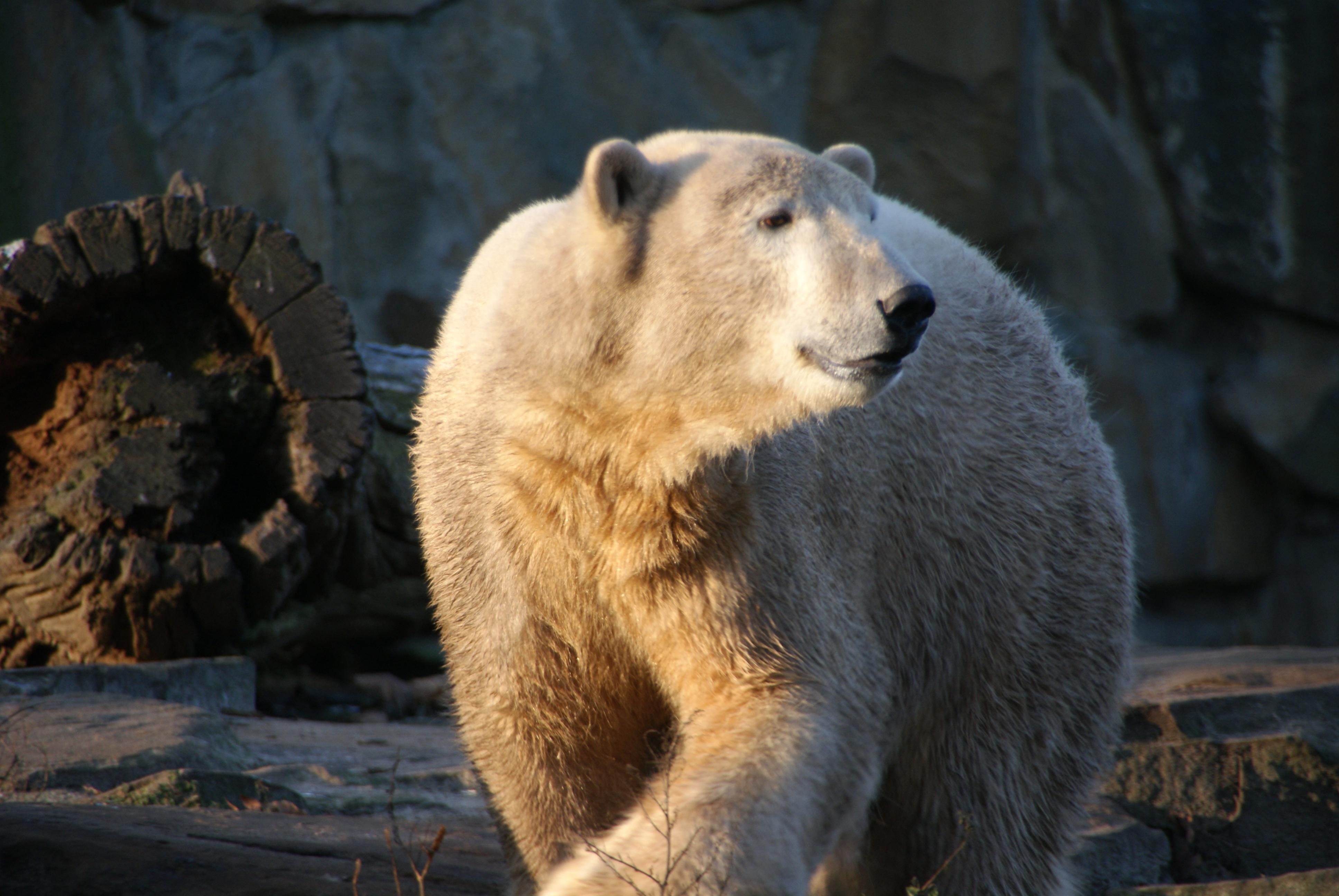Knut20081230-7.jpg