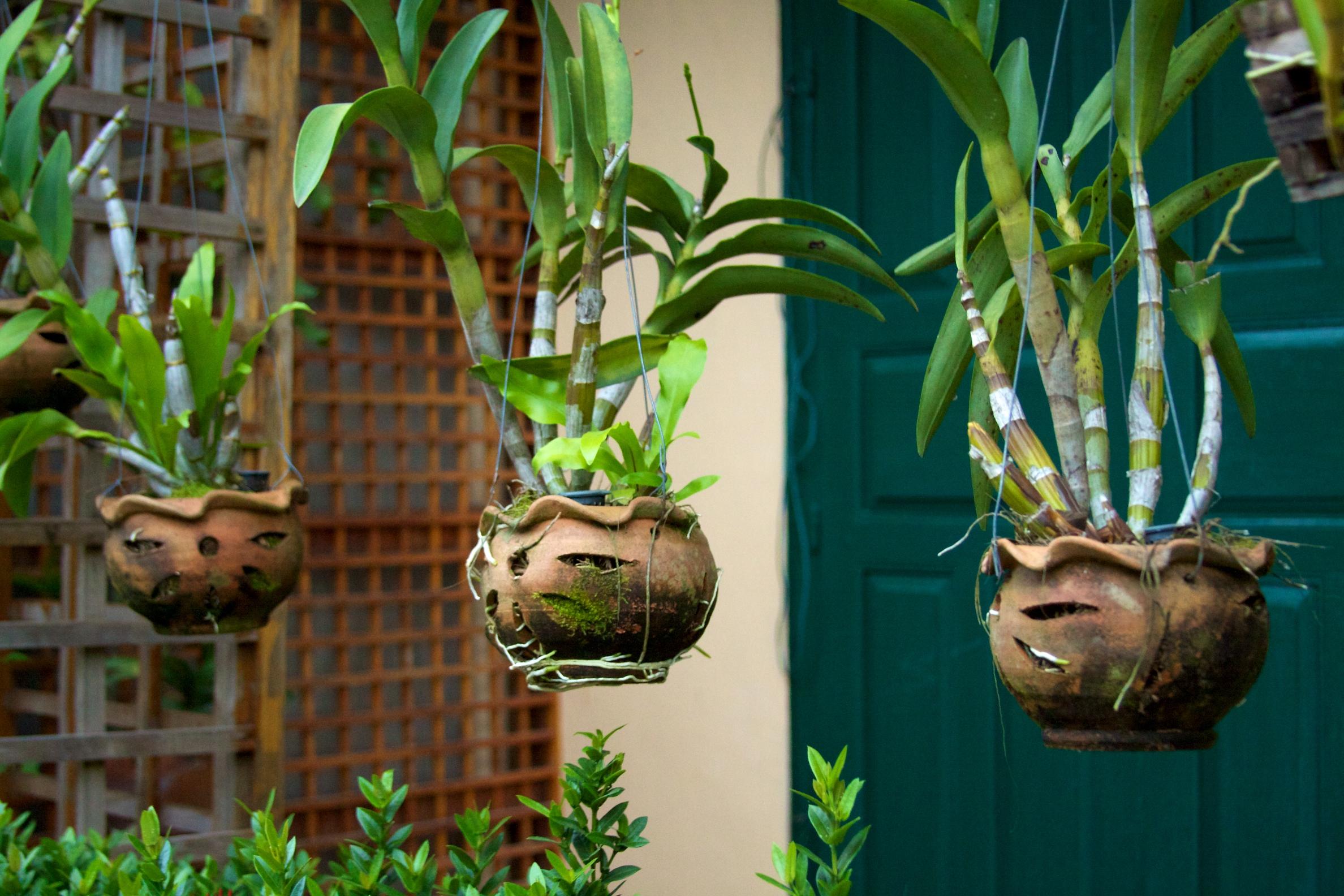 File laos luang prabang 120 hanging plants 6582781745 - Hangende zimmerpflanzen ...