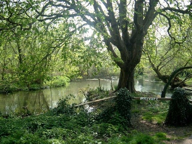 Mill Pond Droxford - geograph.org.uk - 400825