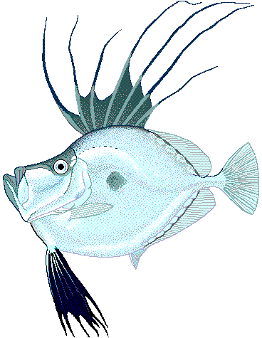 Mirror dory.png
