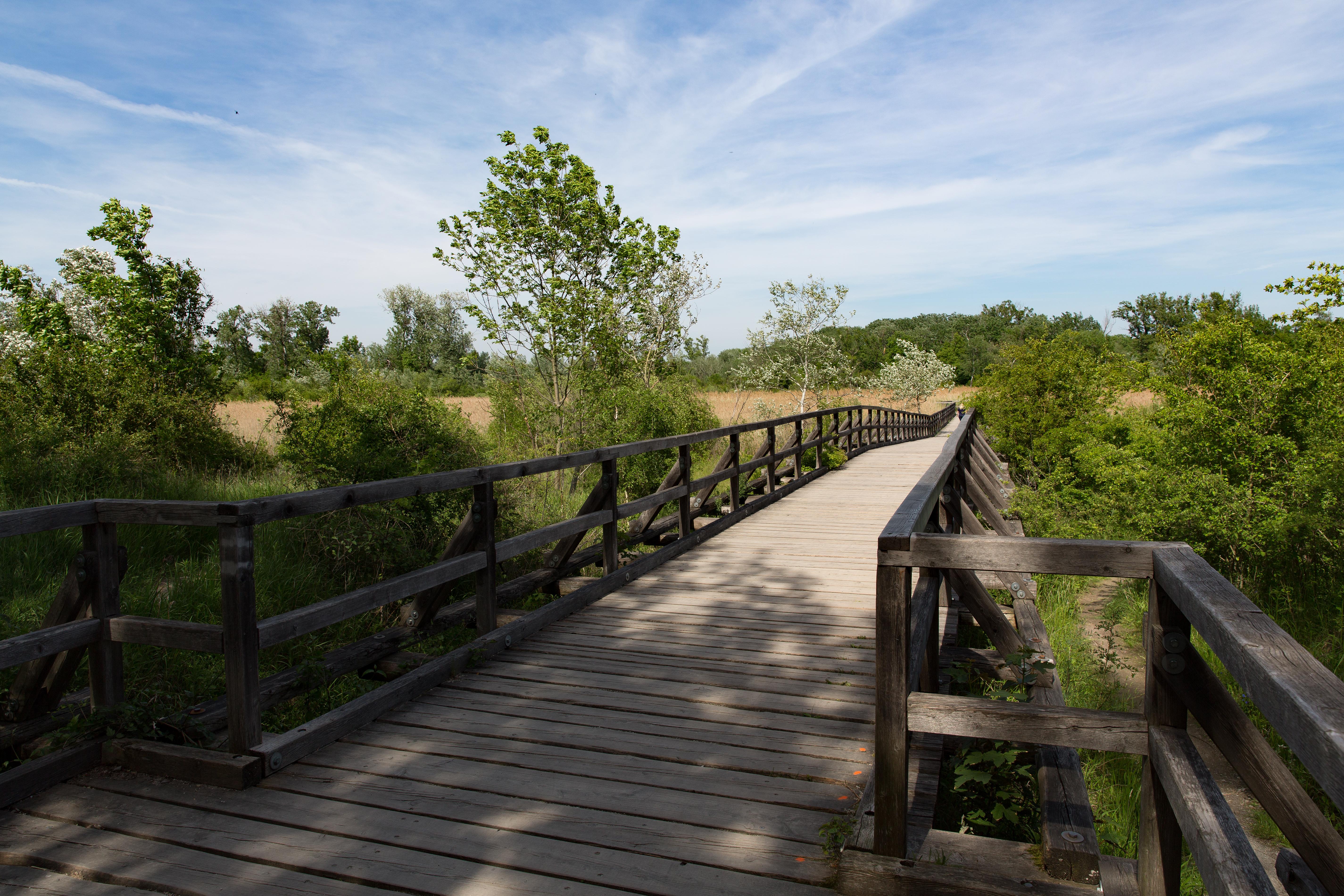 Filenationalpark Donau Auen Lobau Josefsteg Mai 2016 02jpg