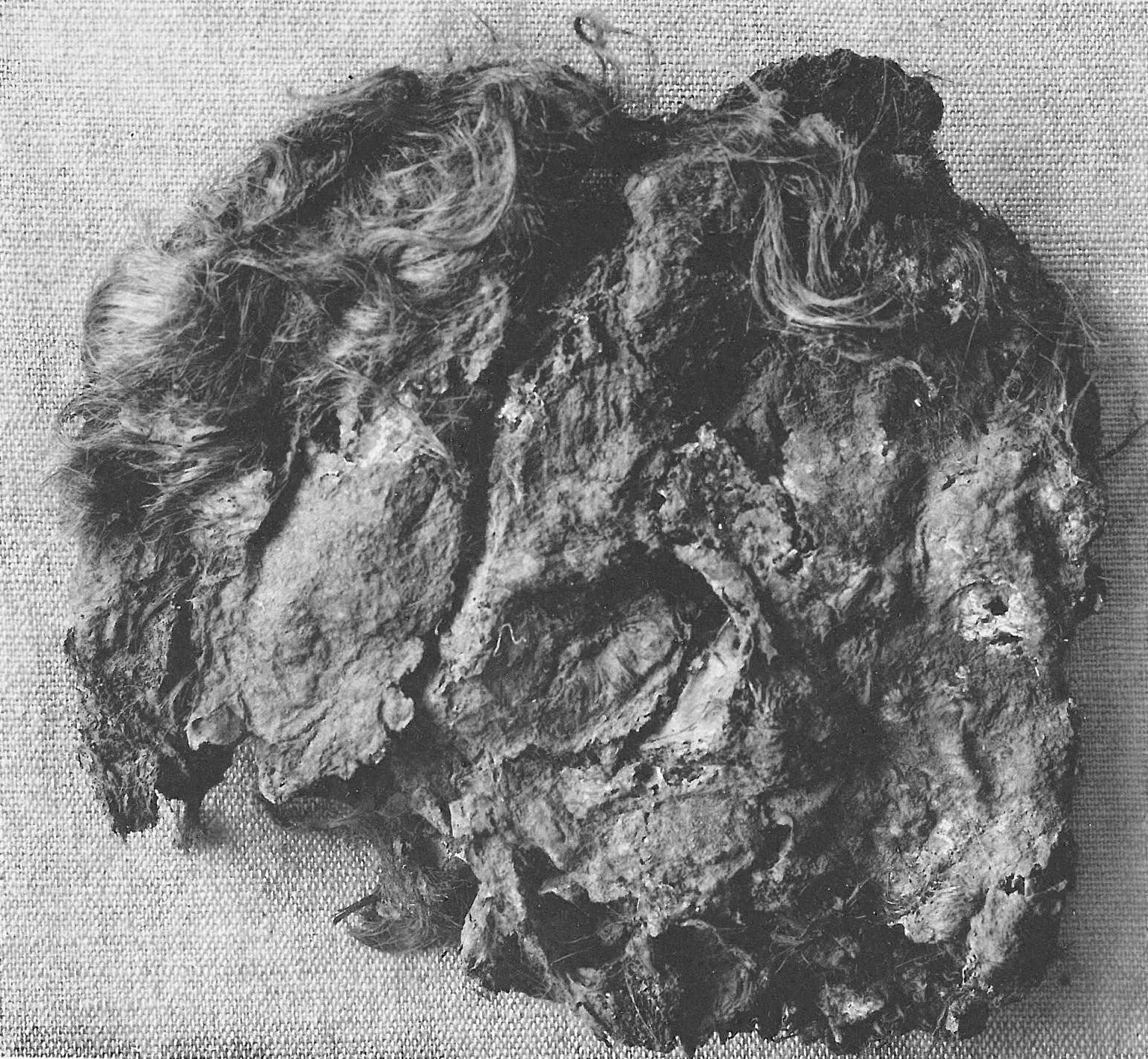Great Dane Weight Chart: List of bog bodies - Wikipedia,Chart