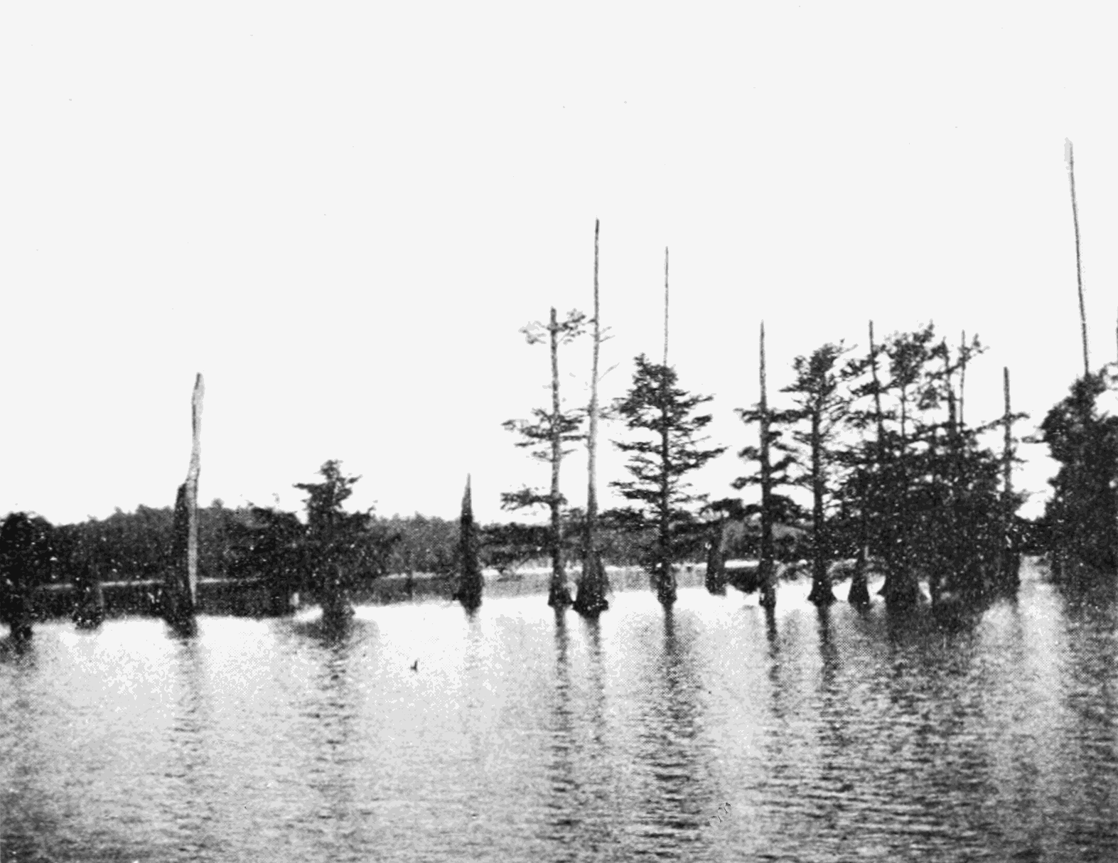 PSM V69 D087 Cypress growth in reelfoot lake tenn after new madrid earthquake.png
