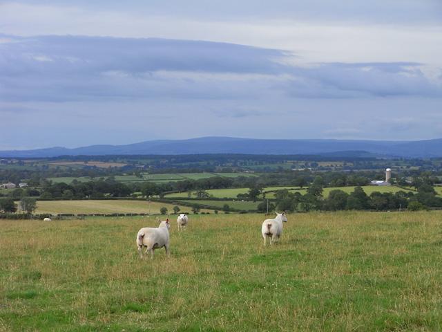 Pasture, Sebergham - geograph.org.uk - 1566138
