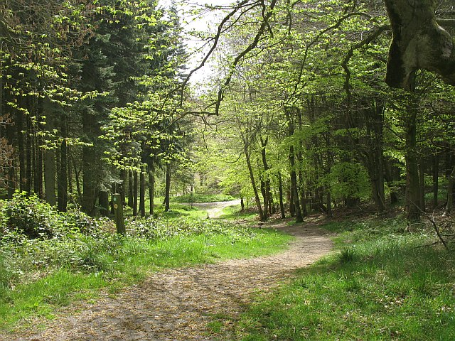 Path, Croft Ambrey - geograph.org.uk - 1290052